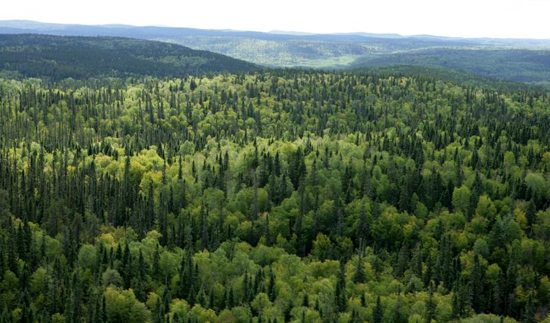 Eleição das entidades ambientalistas no Conselho Nacional do Meio Ambiente – CONAMA