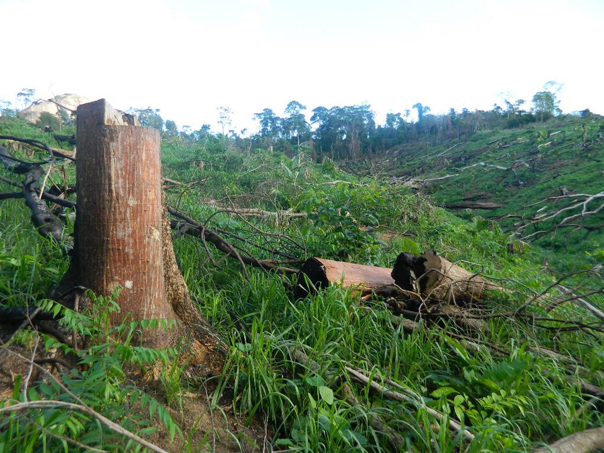 In interview to Rádio Justiça, Alexandre Sion addresses the illegal deforestation