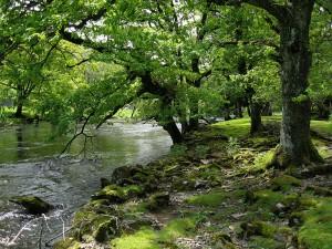Acontece hoje audiência de ações que questionam novo Código Florestal no STF